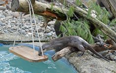Nothing is cooler than an otter swing! Make sure to put some PVC over the rope to prevent any potential tangling hazards!