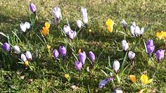 Spring #Norrköping