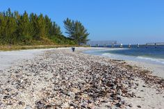 Beaches where you can find tons of beautiful shells in Florida