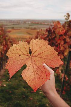 Wandern im Herbst: Auf einer Strecke von rund 75 Kilometern führt der Rheinterrassenweg von Worms bis nach Mainz. Maine, Rhein Main Gebiet, Feet, Frankfurt, Worms, Leaf Tattoos, Wanderlust, Leaves, Blog
