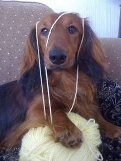 Would you like me to knit you something?