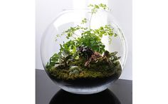 """""""Less work than a garden and more beautiful than a houseplant, terrariums can neatly adorn tables, windowsills or bookshelves and instantly brighten up a placid room. The one pictured above is from Grow Little, a Paris-based company who sell completed terrariums."""" Science Illustrated"""