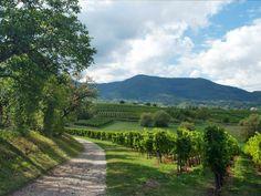 Obernai, France ~Alsace Region