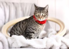Red Kitty Cowl // Cat Scarf // Pet Scarf @Jennifer Hubbell