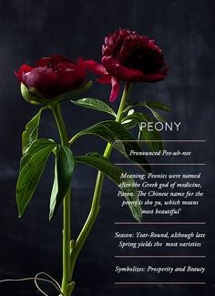Flower Glossary: Peony - Design*Sponge Peonies good Feng Shui flowers for the home - symbol for wealth, good fortune, health, happiness and prosperity