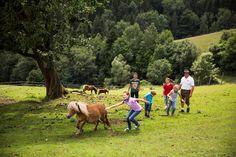 Im Naturpark Almenland begegnen Sie während Ihres Aufenthalts auch vielen vierbeinigen Bewohnern. #pferde #almenland #naturparkalmenland Foto (c) Bergmann Animals, Pictures, Biking, Equestrian, Summer, Animales, Animaux, Animal, Animais