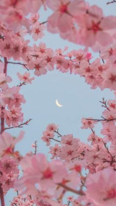wallpaper iphone minimalista Sakura in the moonlight Sakura in the moonlight Frühling Wallpaper, Flower Phone Wallpaper, Spring Wallpaper, Iphone Background Wallpaper, Cherry Blossom Wallpaper Iphone, Anime Scenery Wallpaper, Pink Wallpaper Iphone, Painting Wallpaper, Aesthetic Pastel Wallpaper