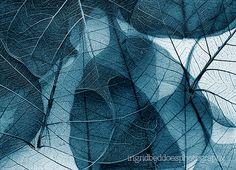 fotografía - naturaleza abstracta fotografía - macro fotografía - naturaleza muerta - arte impresión - decoración del hogar - decoración de la pared de hojas de esqueleto azul