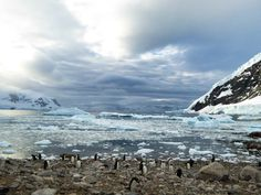 Neko Harbour & Penguins, Antarctica http://www.bucketlistpublications.com/2015/02/09/15-photos-will-make-wish-antarctica-now/