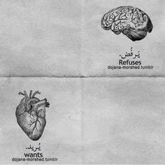صراع بين العقل و القلب