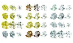 Árboles en planta - vista superior [png] - arq + recursos