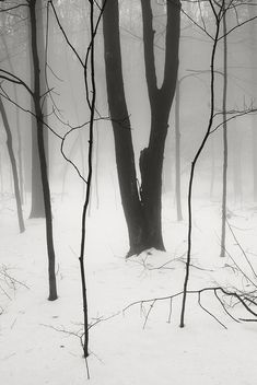 Fog Snow Woods | Flickr, slightly conceptual approach to 'path'? photographic and very beautiful