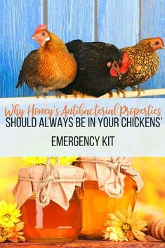 I had no idea that you could use honey for your backyard chickens! Honey has powerful antibacterial properties so it's perfect for your backyard chicken emergency kit. Building A Chicken Coop, Diy Chicken Coop, Chicken Treats, Healthy Chicken, Chicken Incubator, Raising Chickens, Raising Bees, Pet Chickens, Chickens Backyard