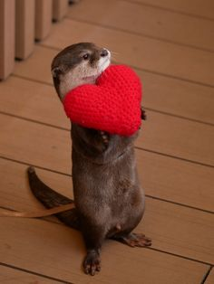 Otter loves you an entire knitted heart's worth