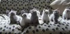 Vidéo d'animaux : les chats ont le rythme dans les poils !