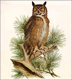 Roger Tory Peterson - Great Horned Owl