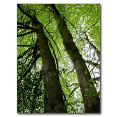 The Beautiful Forest Post Card. Click to buy from my Zazzle store.
