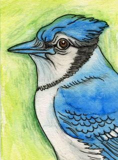 ACEO Original Pencil Art Watercolor Pencil Drawing Blue Jay Bird Art-Carla Smale #Impressionism