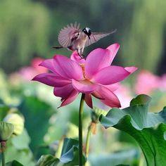 bird, flower, and nature 이미지