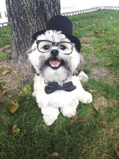 How easy is this? Throw on a bowtie, lens-free plastic glasses and a tiny top hat to make your little guy a proper gentleman.