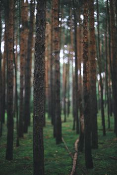 absolutminimum:  Netzener Wald