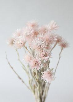 Shabby Flowers, Simple Flowers, Pink Flowers, Beautiful Flowers, Dried Flower Bouquet, Dried Flowers, Flower Bouquets, Floral Centerpieces, Flower Arrangements