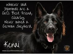 Whoever said diamonds are a girl's best friend, clearly never owned a German Shepherd.  #gsd