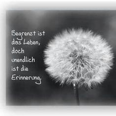 Todesfall Spruch