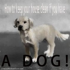 We all love our fur babies and they are as much a part of our family as our children are. However you don't need to be a dog owner for long to realise that keeping the house clean can sometimes be a mammoth task. All you need is a little rain, a bit of mud in the yard, some dog hair, and before you know it, you wonder why you bothered cleaning at all! The good news as that there are some things you can do to make your life a little easier, and a lot less stressful. Check them out and let ...