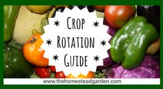 Learn more about crop rotation from my crop rotation guide. This guide will help you have the healthiest garden possible by allowing your plants to properly rotate for optimal soil health.