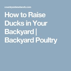 How to Raise Ducks in Your Backyard | Backyard Poultry