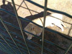 Zoo Arcachon - 25
