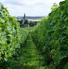 organic Champagne bio - maîtrise de l'herbe