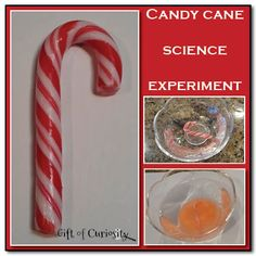 Candy Cane Science Experiment {I Can Teach My Child} Regalar Experiencias!