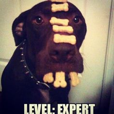 Don't try this at home - I am an Expert! puppy #puppies #puppymemes #puppypictures #dog #dogs #dogmemes #dogpictures #funnydog #funnydogs #funnypuppy #funnypictures #cutedog #cutepuppy #cutepictures #dog #dogslife #dogslover #dogstagram #dogsofinstagram #dogphotography