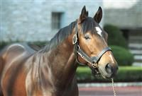 A.P. Valentine(1998)A.P. Indy- Twenty Eight Carat By Alydar. 4x5x5 To Bold Ruler, 5x5 To Nasrullah And Princequillo. 13 Starts 3 Wins 2 Seconds 2 Thirds. $864,170. Won 2000 Champagne(G1), 2nd 2001 Preakness(G1) And Belmont(G1).