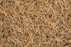Pine needles as mulch- good article