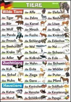 Tieren - Animales