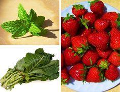 12 Melhores Remédios Naturais – Tratamento para Gastrite e Refluxo