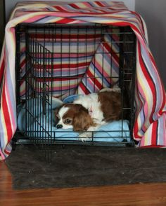 Cavalier King Charles Spaniel in her Cave!   How to Keep Your Dog Warm in The Winter Make a Cave