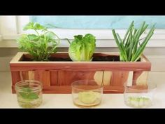 9 Plants That Easily Regrows from Kitchen Scraps | Best Regrowing Plants| Best plants To Regrow Forever Visit http://gardening-abc.com for interesting articl...