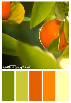 laundry room? Gorgeous greens and tangerines via Colorways ~ Colour Palettes. #shadesoffoodpaintcolours