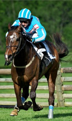 Did you know...the average speed of a steeplechasing thoroughbred is 30 mph? Don't miss the 2014 Iroquois Steeplechase May, 10!!