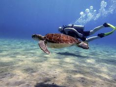 Divers_Curacao10.jpg (940×705)
