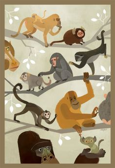 Monkeys Do by John Chou