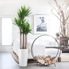 5 Indoor Houseplant Trends for 2020 | Hadley Court - Interior Design Blog Large Indoor Plants, Potted Plants, Yucca Plant Indoor, Potted Trees, Indoor Planters, Indoor Gardening, Home Decoracion, Feng Shui, Floor Plants