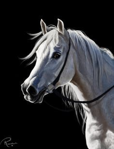 Silverado by NutLu Digital Art / Drawings & Paintings / NutLu Horse Drawings, Animal Drawings, Art Drawings, Most Beautiful Animals, Beautiful Horses, Scratchboard Art, Horse Mane, Horse Artwork, Unicorn Art