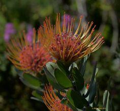Spring flowers pincushion