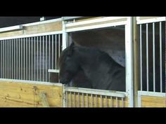 Houdini horse must get out!