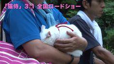 【玉之丞さまの猫萌え動画更新】Vol.7は「甘ったれ玉之丞」。トレーナーさんの腕の中にスッポリ顔をうずめる玉之丞さま。 #猫侍 #白猫 Videos, Animals, Cat Breeds, Animales, Animaux, Video Clip, Animal, Animais